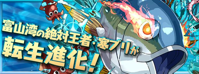 (03/25實裝)「富山湾の絶対王者・寒ブリ」轉生進化!